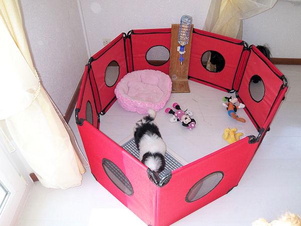 parc pour jeune chiot pas encore propre et tout fou. Black Bedroom Furniture Sets. Home Design Ideas