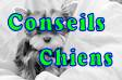 296 conseils chiots